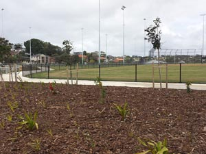 Randwick Council athletics field